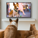 Free Trial of DogTV - Television for Dogs