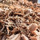 Free Wood Chips with Free Delivery