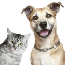 Free Pet Accessories Product Testing