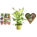 Up to 40% Off Live Plants and Succulents