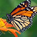 Free Butterfly Garden Seeds [SASE]
