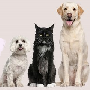 FREE $5 Credit to Spend on Pet Products