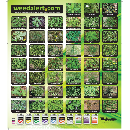 FREE Weed Identification Poster